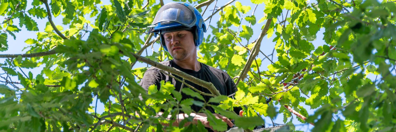 Tree Service Insurance Vermont
