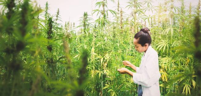 Cannabis Insurance Vermont